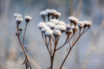 Frost 041