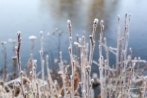 Frost 054