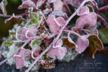Frost 088