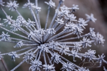 Frost 142
