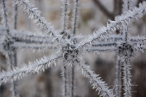 Frost 147
