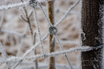 Frost 148