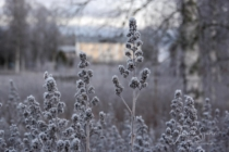 Frost 039