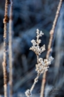 Frost 084