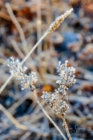 Frost 086