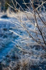 Frost 091