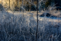Frost 098