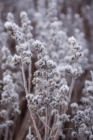 Frost 035