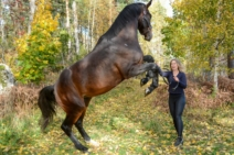 Lenas hästar okt 202140