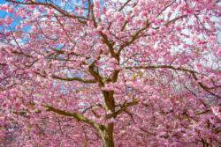 Blommor & växter 005