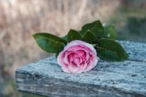 Blommor & växter 007