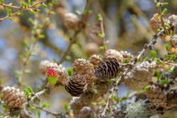Blommor & växter08
