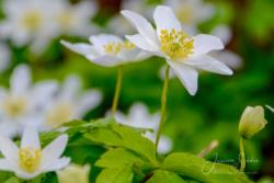 Blommor & växter09