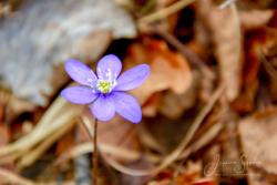 Blommor & växter10