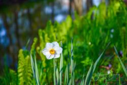 Blommor & växter15