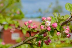 Blommor & växter17