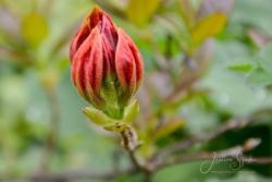 Blommor & växter 024