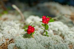 Blommor & växter25
