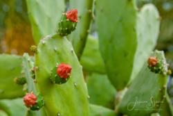 Blommor & växter 028