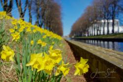Blommor & växter30
