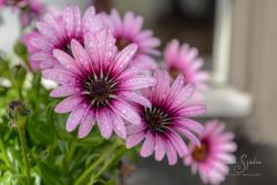 Blommor & växter32