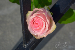 Blommor & växter36