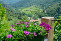 Blommor & växter 037