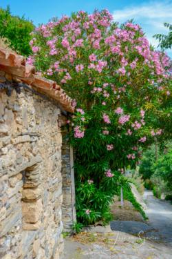 Blommor & växter 038