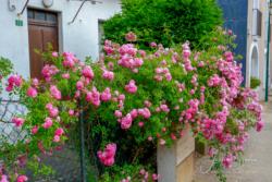 Blommor & växter39