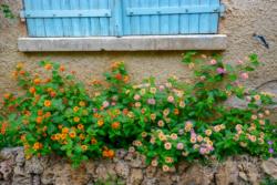 Blommor & växter40