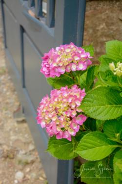 Blommor & växter41