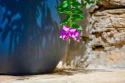 Blommor & växter 042