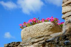 Blommor & växter43