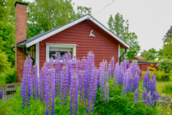 Blommor & växter45