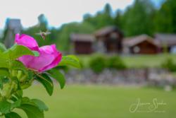 Blommor & växter46