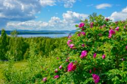 Blommor & växter 048