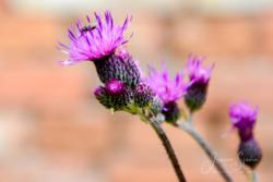 Blommor & växter51