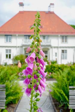 Blommor & växter53