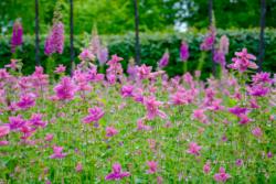 Blommor & växter54