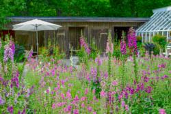 Blommor & växter 056