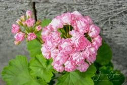 Blommor & växter57