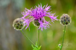 Blommor & växter58