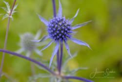 Blommor & växter59