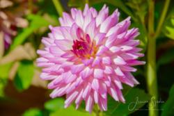 Blommor & växter61