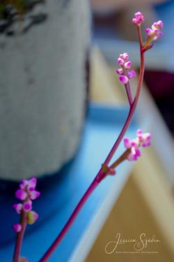 Blommor & växter62