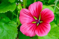 Blommor & växter 064