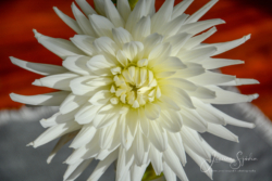 Blommor & växter65