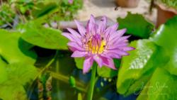 Blommor & växter70