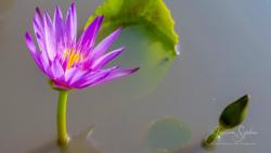 Blommor & växter 071