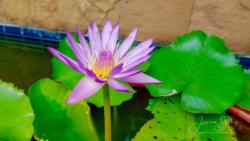 Blommor & växter72